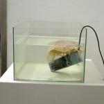 Jayne Cherry, Les jeunes sont ici, 2012, contemporary art nice