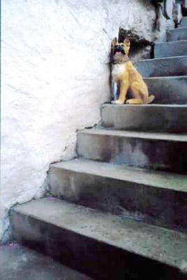Alejandro Gomez de Tuddo -  Buchs, Switzerland, 2002 Série Perro nahual  - La Station -  Art Contemporain - Nice - Aux alentours / De la photographie