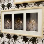 Ingrid Luche - Portraits de Bestioles, photographies couleur encadrées [détail]  - La Station -  Art Contemporain - Nice - Écotone