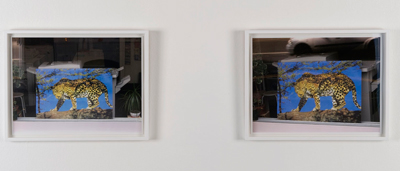 Ingrid Luche - Le Tigre (Léopard Bleu), 2007 - La Station -  Art Contemporain - Nice - Ingrid Luche / Bruno Serralongue