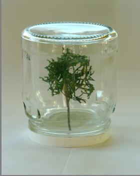 Ian Wieczorek, Specimen Tree, 2012 art contemporain nice